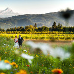 Top 10 Wineries For A Wedding