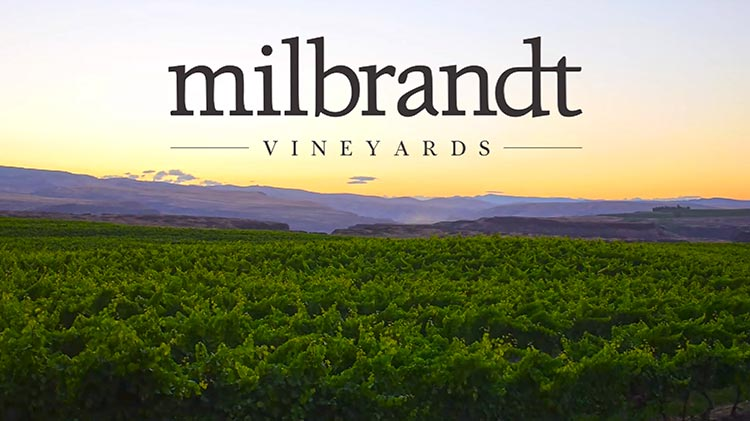 Evergreen Vineyard in the Ancient Lakes AVA is one of Milbrandt's estate vineyards.