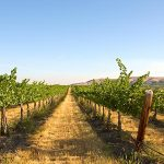 Experience Fall in Yakima Valley During the Annual 'Catch the Crush' Weekend Oct. 14 & 15