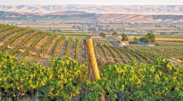 A Feminine Touch at Yakima's DuBrul Vineyard