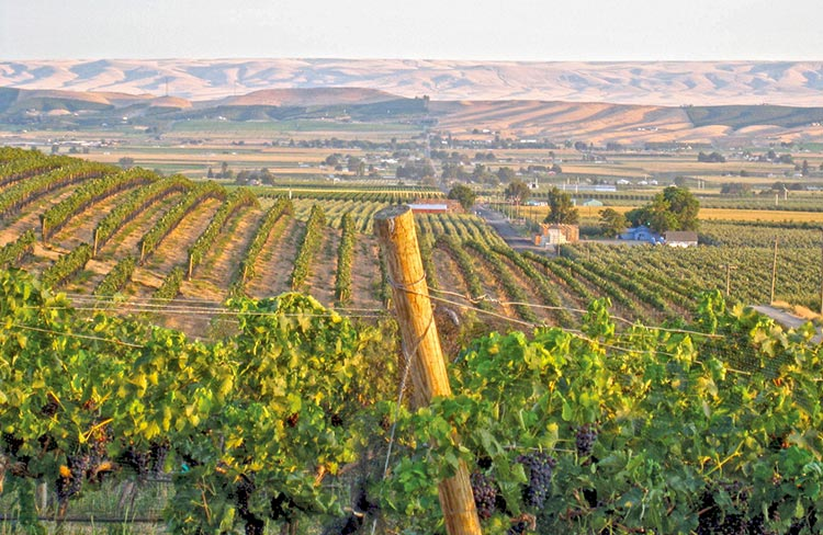 DuBrul Vineyard is located in the Yakima Valley and provides quality fruit to a number of boutique wineries