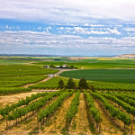 Featured Wines: Horse Heaven Hills AVA