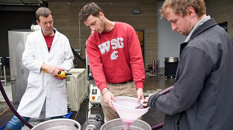 WSU's Viticulture and Enology program