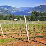 Touring Celilo Vineyard: Pinot Noir and Chardonnay