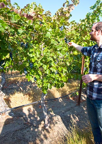 JJ Williams of Kiona Vineyards points out a block of Cabernet planted in 1975. Photo by Tasting Room Magazine/John Vitale