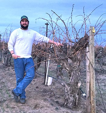 Otis Vineyard manager Sean Tudor poses next to the state's oldest existing Cabernet vines planted in 1957.