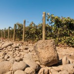 Walla Walla Valley: A Matter Of Rocks