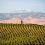 Top 10 Agri-Tourism Destinations in Wine Country