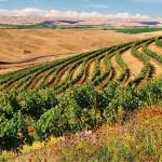 Woodward Canyon: Seeds of Sustainability