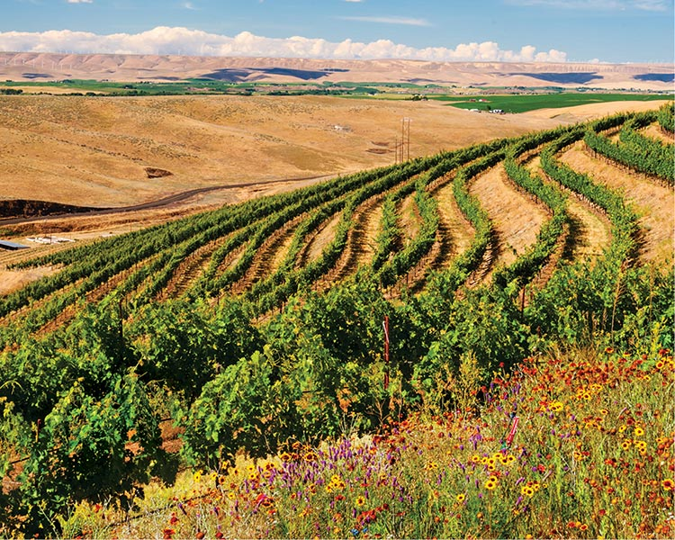 Wildflowers planted at the estate vineyard is one step towards sustainability
