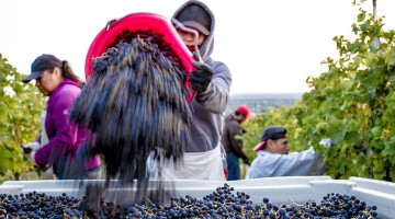 2015: Tasting Room Magazine's The Year in Wine